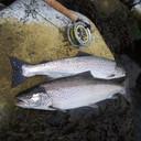 Udpluk af mine fangster på kysten